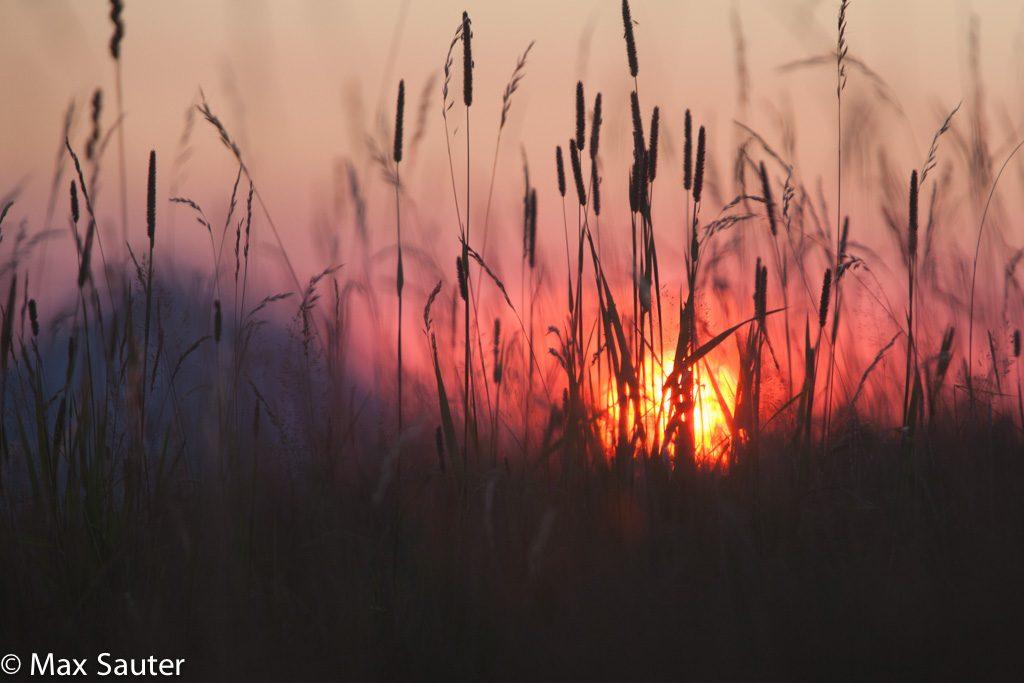 lever de soleil sur le mont d'or